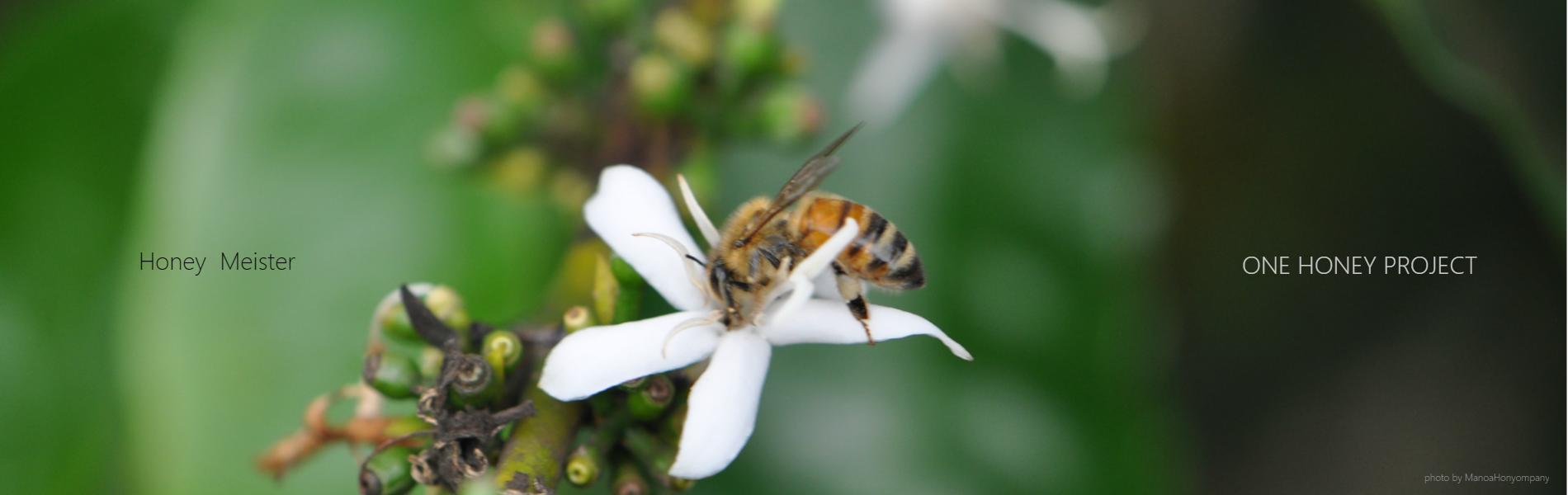 花とみつばち 株式会社ワンハニープロジェクト HoneyBee みつばち Flower 花 HoneyMeister はちみつマイスター